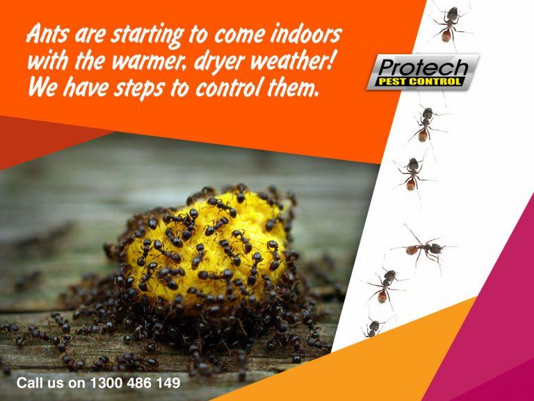 Ant control 768x576